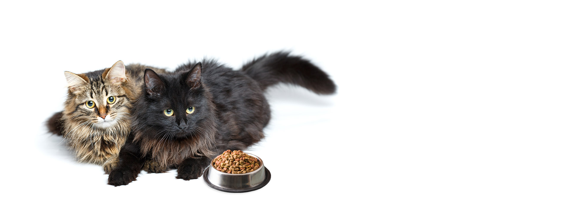 Online Cat Food Store